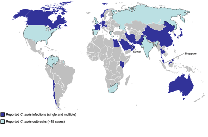 candida auris infection spread map